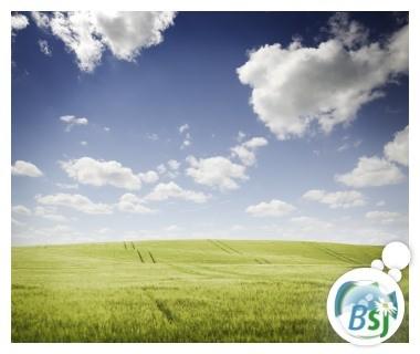 Champ de blé sous un ciel bleu